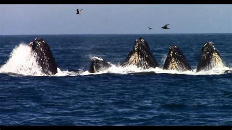 Whale Watching on the Monterey Bay - YouTube