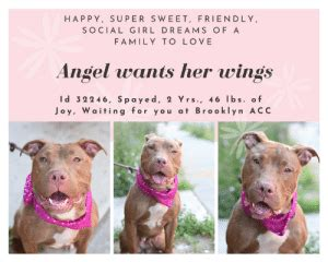 HAPPY SUPER SWEET FRIENDLY SOCIAL GIRL DREAMS OF a FAMILY