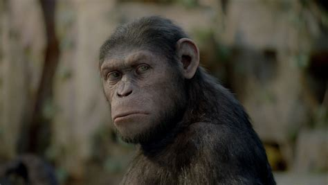 Rise of the Planet of the Apes: Monkey shines | Toronto Star