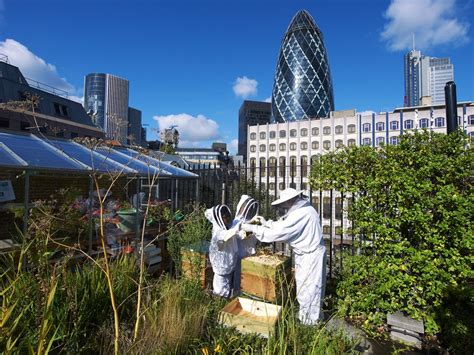 Next stop, the Olympics: Urban farmers are digging for eco