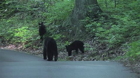 Roaring Fork Motor Nature Trail in The Great Smoky