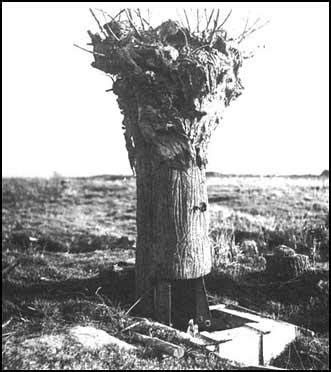 Snipers in the First World War