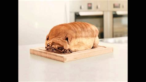 Pug Bread - REAL Funny Pictures - YouTube
